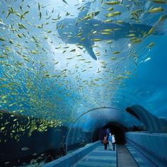 "The Georgia Aquarium in Atlanta is advertised as the ""world's largest aquarium."" It has animals of 500 different species. The aquarium holds more than million gallons of marine and fresh water. Pictured above is the The Ocean Voyager exhibit tunnel. Places Around The World, Oh The Places You'll Go, Places To Travel, Travel Destinations, Places To Visit, Around The Worlds, Georgia Aquarium, The Aquarium, Dream Vacations"