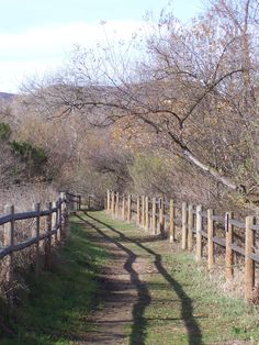 A beautiful trail in our foothills, during the wintertime.