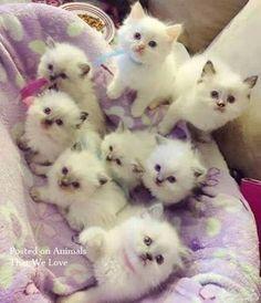 Une nichée de futurs chats bottés !