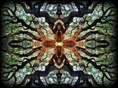 #natureinspired #natureart #naturedark #nature #darktree #treeart #treekaleidoscope #trees #tree #organicart #organic #psychedelic #awesomenature #fractalforest #darkforest #forest by phicneal