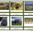 Animals of Africa Montessori 3-Part Cards