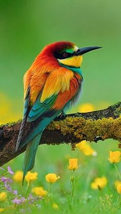 Find and save ideas about Colorful birds, Pretty birds, Beautiful birds and Tropical birds. Kinds Of Birds, All Birds, Little Birds, Love Birds, Pretty Birds, Beautiful Birds, Animals Beautiful, Beautiful Places, Beautiful Pictures