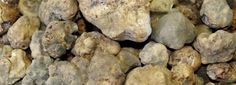 White Truffle Season 2013 has officially begun! www.pastandtruffles.co.uk