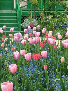 Photo: oceanbaby, via Claude Monet, Monet Garden Giverny, Giverny France, Monet Paintings, Public Garden, Spring Blooms, Dream Garden, Garden Inspiration, Beautiful Gardens