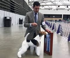 Image result for Garcini's the gazillionair wire fox terrier
