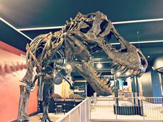 Kirby Science Discovery Center - Sioux Falls, SD - Kid friendly act... - Trekaroo