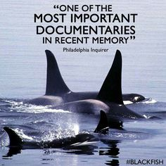 Blackfish. Watch this important documentary. When you're done, contact #seaworld and let them know how you feel.