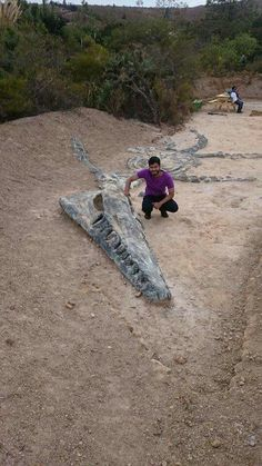 Kronosaurus fossil.  Can you even imagine what this looked like when it was swimming through the ocean?