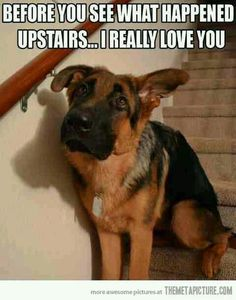 Funny animal memes make me laugh - dog memes Funny Animal Memes, Cute Funny Animals, Funny Animal Pictures, Funny Cute, Funny Dogs, Funny Memes, Animal Funnies, Dog Pictures, Funny Photos