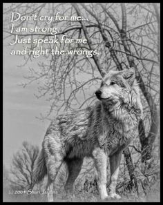 Here is Wolf Quote Ideas for you. Wolf Quote lone wolf love this great quote im wolfy all the way. Beautiful Creatures, Animals Beautiful, Lone Wolf Quotes, Tier Wolf, Of Wolf And Man, Wolf Spirit Animal, Wolf Stuff, Wolf Love, Wolf Pictures