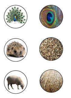 Animal Activities, Montessori Activities, Animal Classification, Montessori Materials, Working With Children, Matching Games, Zoology, Animals Of The World, Small World