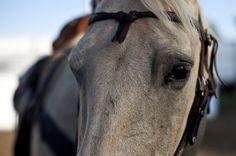 #Horse