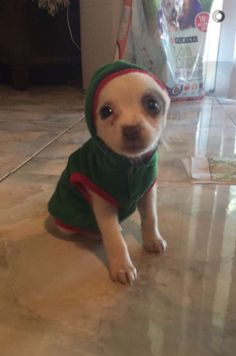 This itty bitty puppy in an itty bitty hoodie. | Just 21 Really Great Dog Pictures