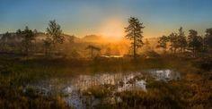 Туманное утро на болоте. Север Ленинградской области. #Красоты_России #КрасотыРоссии #Россия