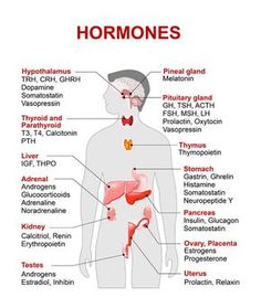 Examples of Hormones and the Location of Production