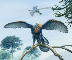 AGATHAUMAS: Archaeopteryx lithographica 1861-2011