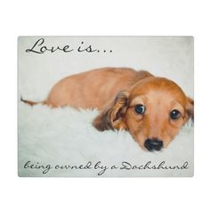 Love is being owned by a Dachshund-Photo Plaque