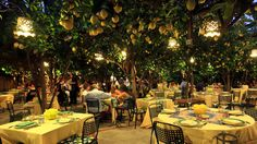 da Paolino Restaurants Capri  Oh my how wonderful it would be to have dinner under this canopy of lovelyness