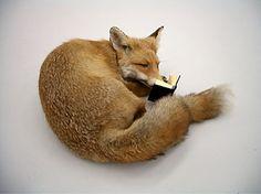 Mr. Fox reads