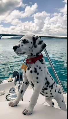 A Dalmatian puppy's first time on a boat! - pets - A Dalmatian p. - A Dalmatian puppy's first time on a boat! – pets – A Dalmatian puppy's first time on a boat! Baby Animals Pictures, Cute Animal Pictures, Dog Pictures, Animals And Pets, Newborn Animals, Funny Animal Photos, Cute Little Animals, Cute Funny Animals, Cute Dogs And Puppies