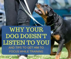 Stop repeating commands and learn how to get your dog to focus! #dogs