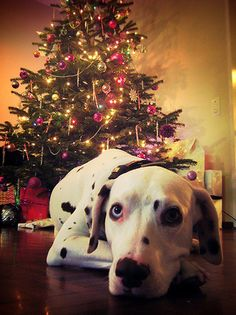 Keeping curious pets safe around the Christmas tree is easy with a few simple tips