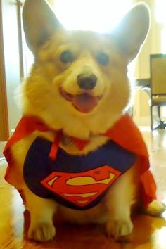 Supercorg to the rescue!