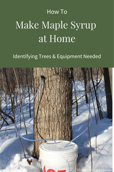 Maple Syrup Making: Identifying Trees & Equipment Needed - Life on Misty Acres