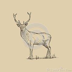 Hand drawn a male deer