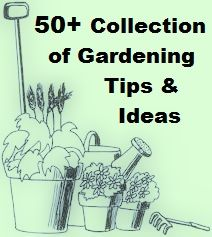 50+ Collection Of Gardening Ideas & Tips