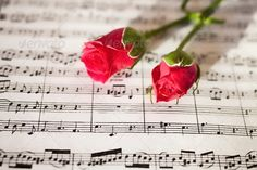 Pink roses on musical notes (beauty, black, bouquet, classical, close-up, color, day, flower, horizontal, music, musical, nature, nobody, note, old, paper, petal, pink, plant, red, rose, sheet, text, valentine's)