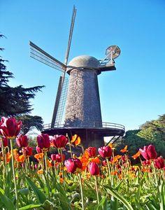 Fotos de Florecen los tulipanes en el mundo - Yahoo! Noticias