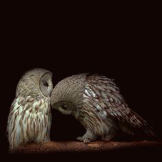 Owls. ☚