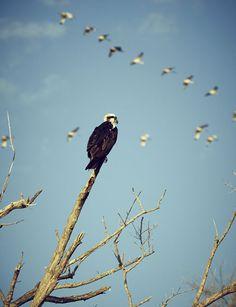 Birds in the sky, Everglades, Florida