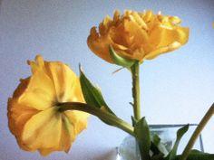viel gelbes