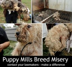 #stoppuppymills We are dedicated to educating people about puppy mills. We believe that creating awareness by spreading the word about our mission can help put an end to the cruel commercial dog breeding industry. We ask for your support. Please join us: https://www.facebook.com/saynotopuppymills