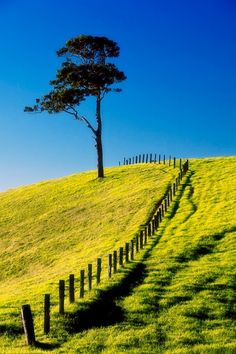 Late afternoon sunlight and fields on top of hills.  The Fence by Gary Schlatter