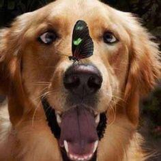 Pets Fabulosas - La Casa de las Mascotas  #animallovers #funnyvideos #mosquito #pets #animals