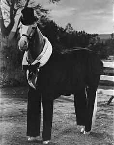 Bamboo Harvester, or more commonly known by his stage name, Mister Ed