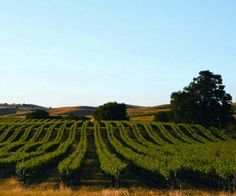 Livermore, California - where I would like to live someday