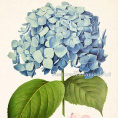 Living room prints, Hydrangea art, Home wall decor, Hydrangea print, Hydrangea printable, Antique botanical print, Print vintage, #34. YOU
