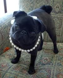 Female pearl jewelry for dogs