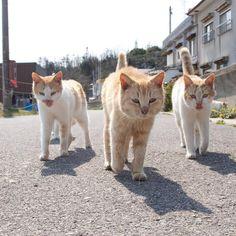 いいね!2,439件、コメント10件 ― 山本正義 立ち猫 猫 catさん(@tachineko.ym)のInstagramアカウント: 「猫来る A cat comes. #東京カメラ部 #カメラ部 #立ち猫 #站立貓 #ねこ #猫 #neko #猫来る #ぶっとびー #standingcat #cat #貓 #ネコ #ぺろにゃん…」