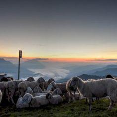 Wie wärs mal mit einem Schäferstündchen auf der Alm?  #Alm #Berg #wandern #schafe #Steiermark #Steirischegeheimtipps Schaefer, Berg, Mountains, Nature, Travel, Adventure, Hiking, Tips, Naturaleza