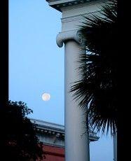 A Palmetto Moonrise