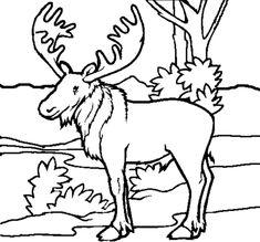 free animal coloring pages printable animal coloring pages of - Baby Forest Animals Coloring Pages