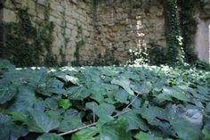 Pared y suelo de hojas.