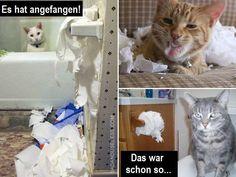 Katzen und Klopapier | Unfassbar.es