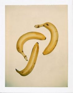 model's own: Andy Warhol Still-life Polaroids