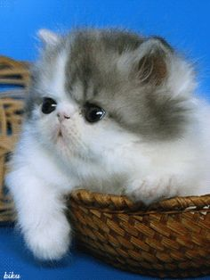 Wiggly Little Kitty Nose cute animals cat animated pets kitten gif kitty nose